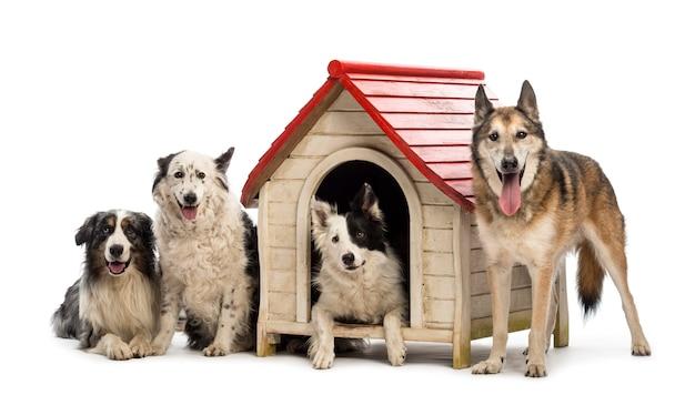 Groupe de chiens dans et autour d'un chenil sur fond blanc