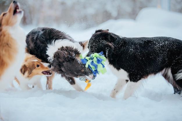 Groupe de chiens dans la neige