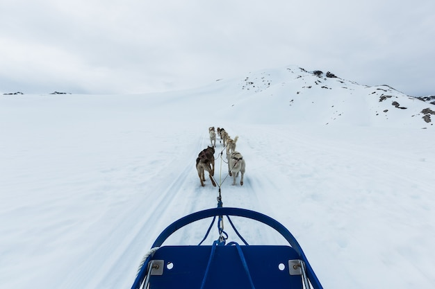 Groupe de chiens de traîneau à skagway, alaska