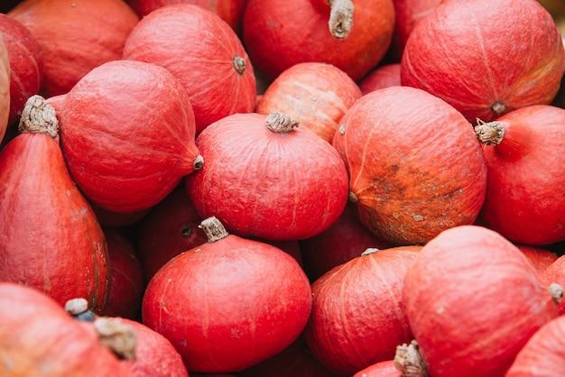 Groupe de citrouilles rouges dans le panier