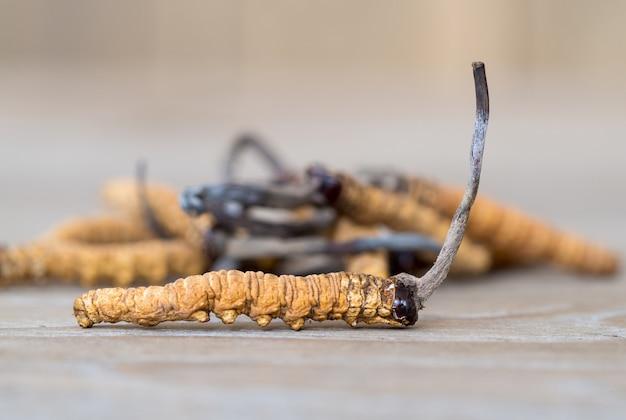 Groupe de cordyceps aux champignons ou ophiocordyceps sinensis il s'agit d'une plante sur une table en bois.