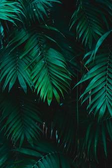 Groupe de feuilles vertes tropicales