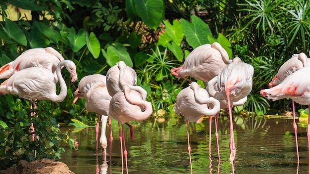 Groupe de flamants blancs debout dans un étang