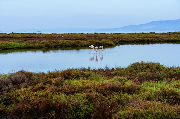 Un groupe de flamants roses marche dans l'eau de mer entre des formations rocheuses qui sortent de l'eau dans le delta du fleuve. delta de l'èbre