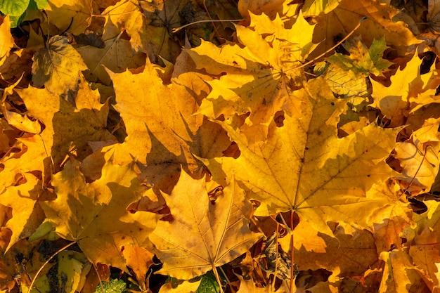 Groupe de fond automne feuilles d'oranger.