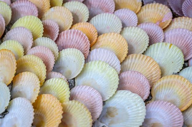 Groupe de fruits de mer et palourdes détail texture
