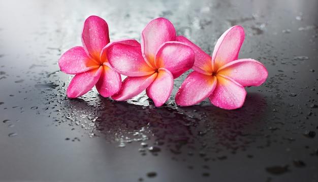 Groupe goutte fond frangipanier rose humide noir