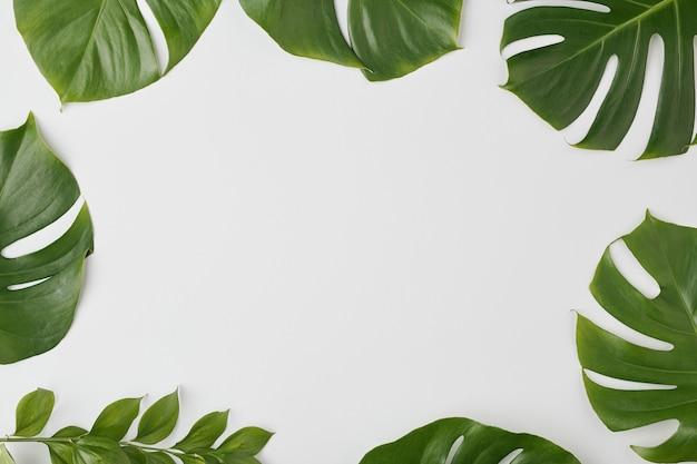Groupe de grandes feuilles vertes de diverses plantes faisant cadre autour de copyspace pour votre message ou publicité