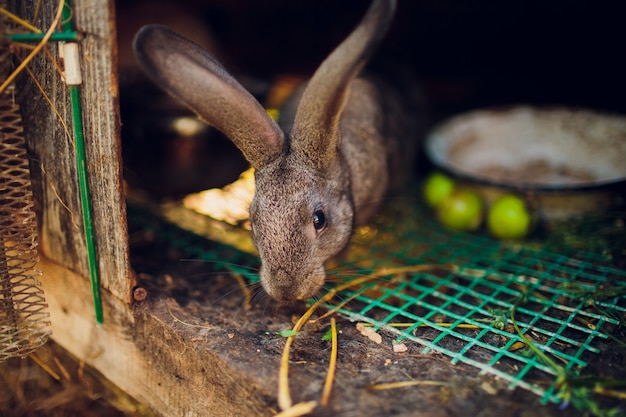Un groupe de jeunes lapins dans la huche
