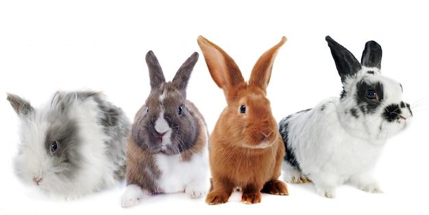 Groupe de lapin