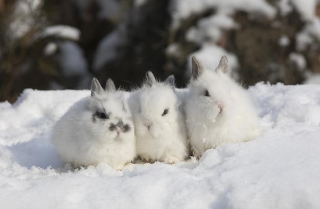 Groupe de lapins dans la neige