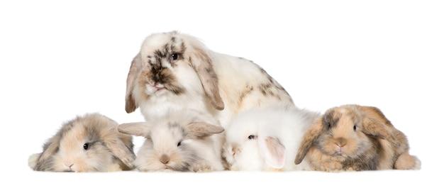 Groupe de lapins isolés