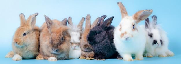 Un groupe de mignon petit lapin sur le sol
