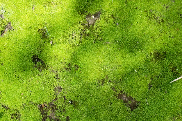 Groupe de mos au sol ou au mur
