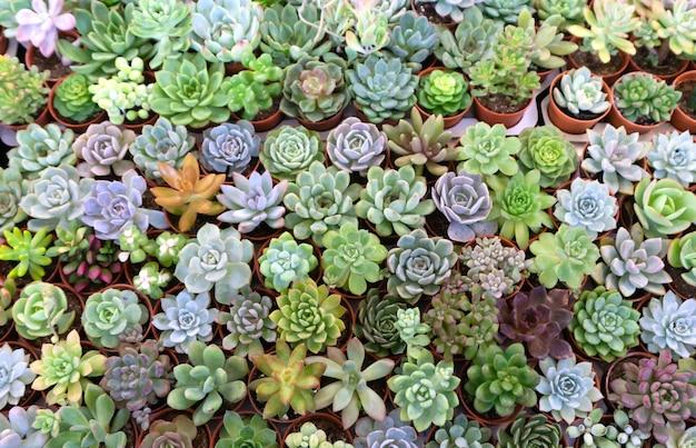 Groupe de nombreux cactus en pot, un cactus est un membre de la famille des plantes cactaceae