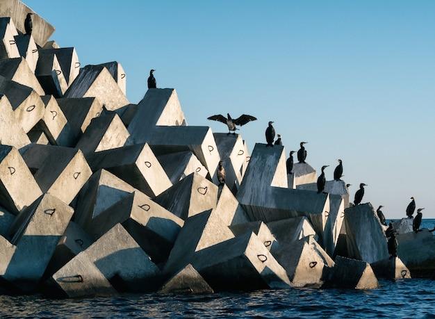 Groupe d'oiseaux cormorans assis sur un brise-lames dans le port de mer