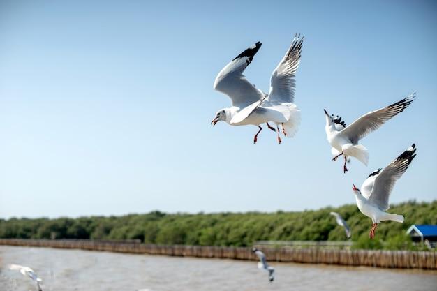 Groupe d'oiseaux de mouette volent près de la mer