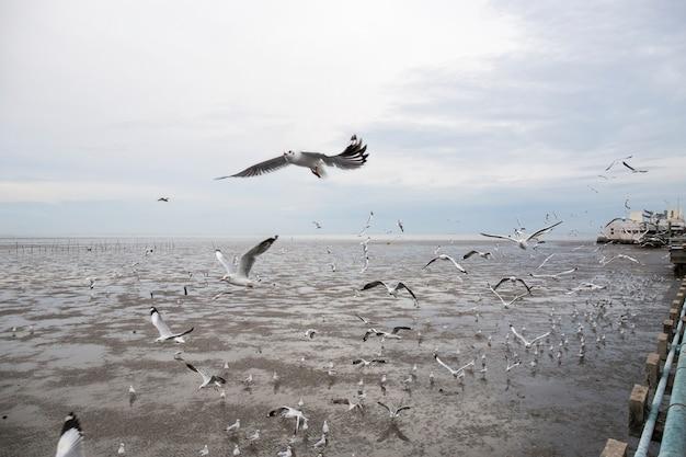 Groupe d'oiseaux de mouette volent.