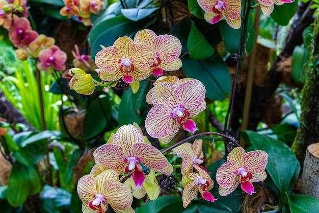 Groupe d'orchidées en fleurs.