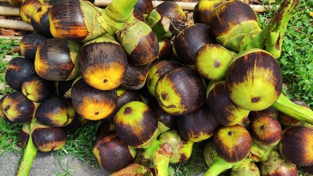 Groupe de palmier toddy, palmier à sucre.