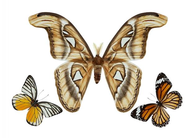 Groupe de papillons isolé
