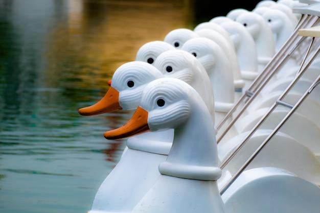 Un groupe de pédalos de canards blancs est stationné dans le lac.
