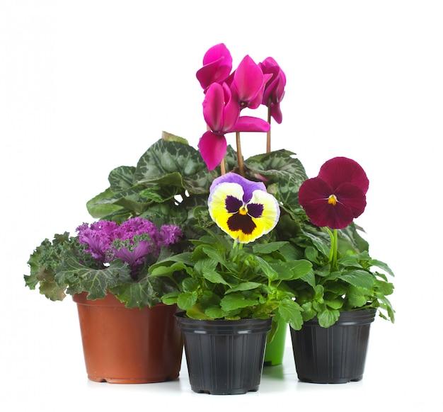 Groupe de plants