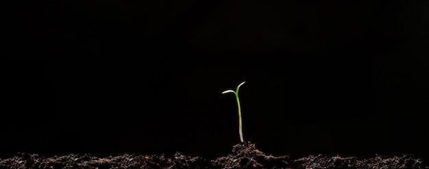 Groupe de pousses vertes poussant hors du sol