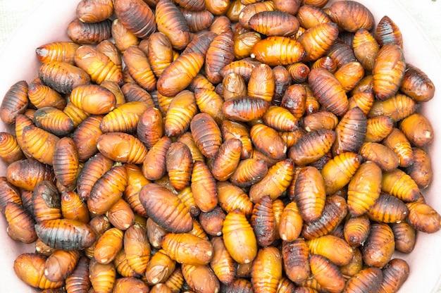 Groupe pupa marron.