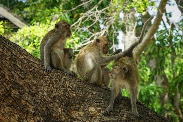 Groupe de singe jouant avec un ami sur l'arbre