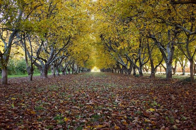 Grove en automne avec des feuilles d'or