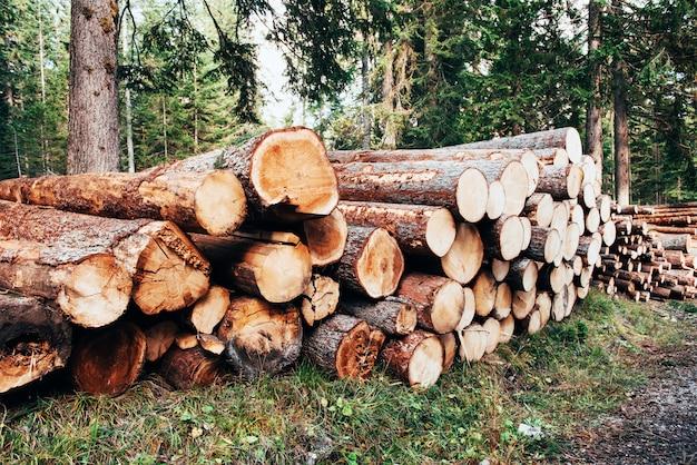 Grumes en bois fraîchement récoltées empilées en tas dans la forêt verte