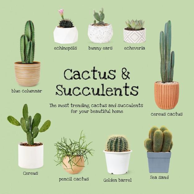 Guide des cactus et succulentes