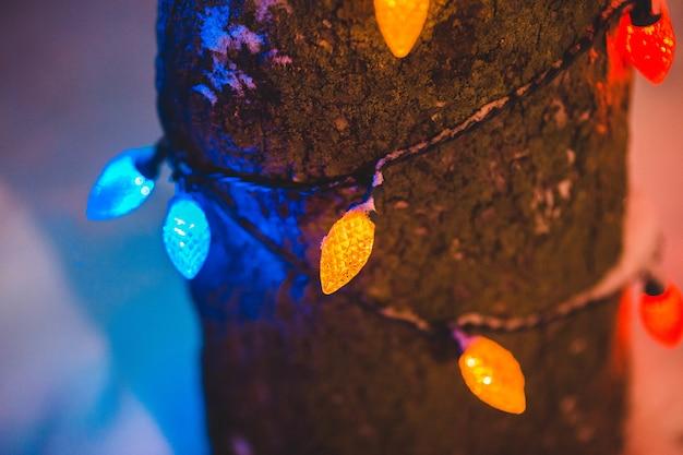 Guirlande lumineuse jaune, bleue et rouge sur une branche