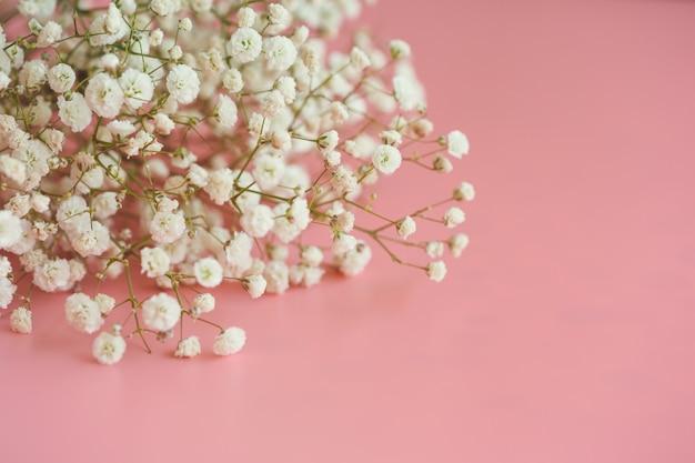 Gypsophile fleur de souffle de bébé blanc sur rose pastel
