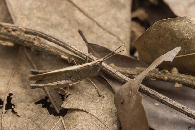 Habitat de la micro-insecte de la faune naturelle