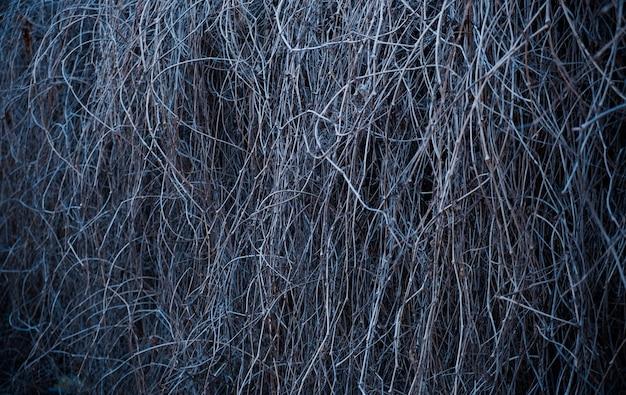 Haie de branches de vigne sèches fond nature