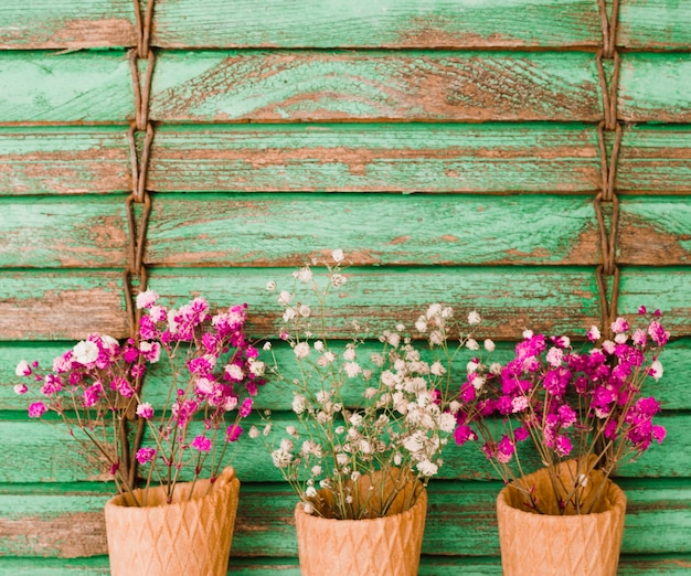 L'haleine de bébé rose et blanche fleurit dans le cône contre le fond en bois