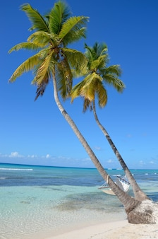 Hamac sur un palmier sur la plage
