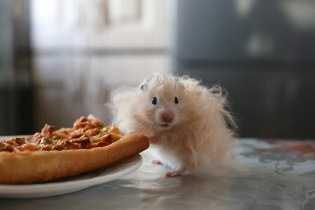 Hamster beige moelleux se tient près d'une assiette de pizza