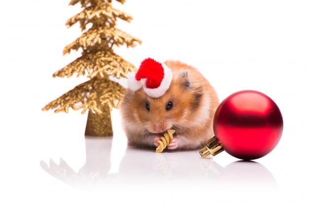 Hamster mignon avec bonnet de noel isolé