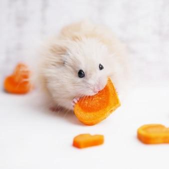Hamster moelleux avec une carotte.