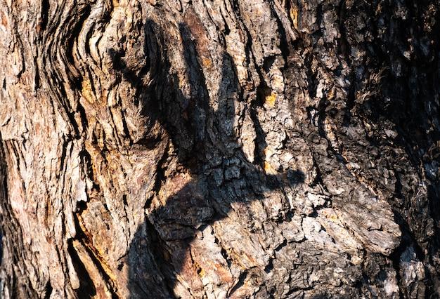 Hand.destroy nature concept idée sauver l'environnement propre sauver fond de terre