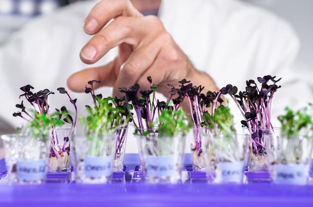 Hand ofsenior male tech sélectionne un lot de cresson-salat pour les tests