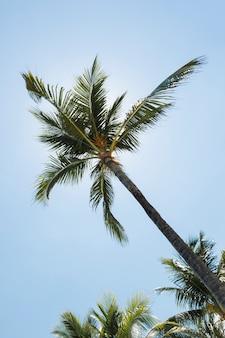 Haut palmier et magnifique ciel bleu