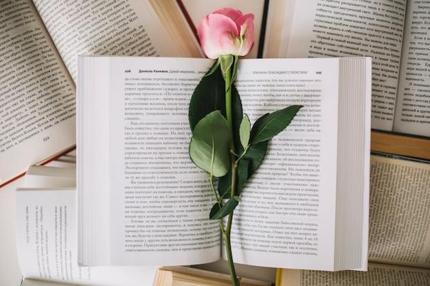 D'en haut rose sur les livres ouverts