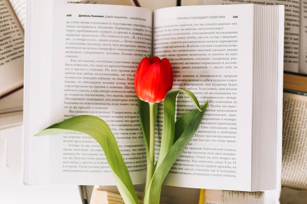 D'en haut tulipe sur le livre