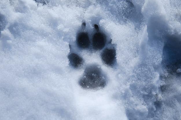 D'en haut vue sur un animal de compagnie dans la neige