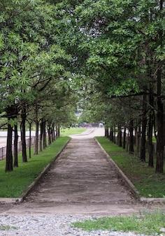Haute arche d'arbre le long du chemin en béton.