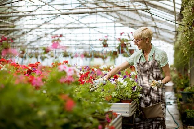 Haute femme travaillant dans un jardin de fleurs